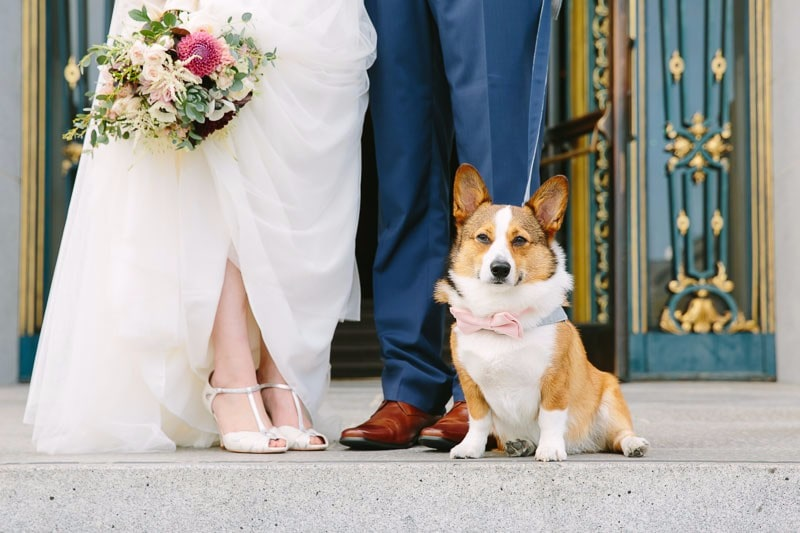 San Francisco Wedding Photographer Bring Your Dog to Your Wedding